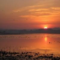 11月、日の出とともに飛び立つマガンの群れ(宮城県伊豆沼)